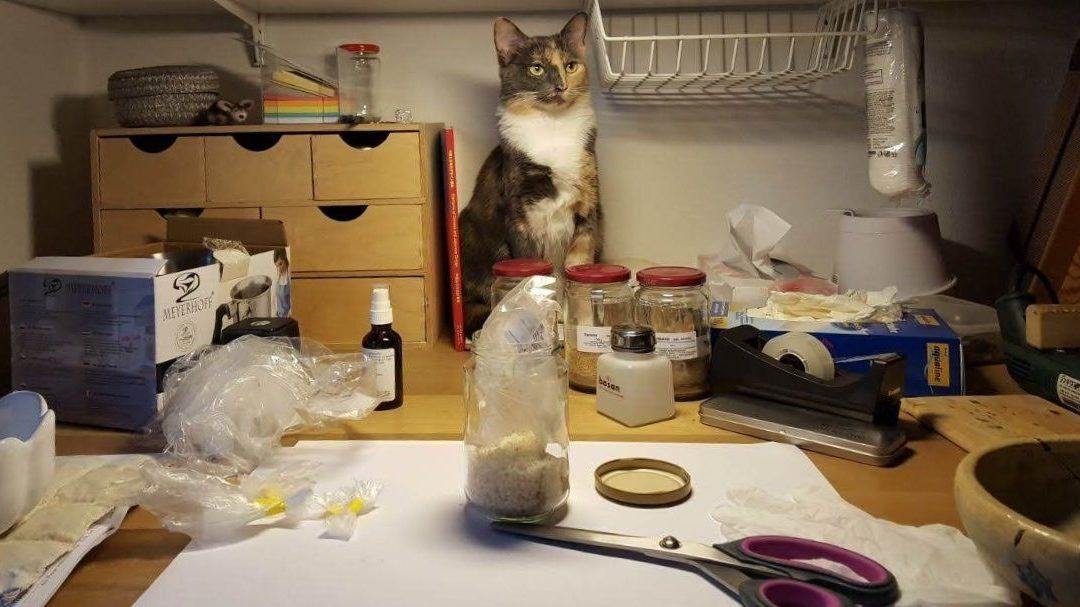 Kintsugi-Atelier Tamara Stadler - Juni 2019 – Einrichtung mit Katze