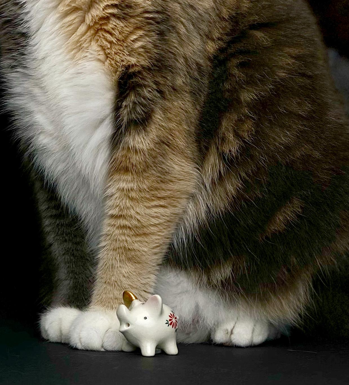 Kleines Schweinchen mit goldenem Ohr neben der großen Katze kintsugi-i-see Tamara Stadler