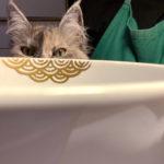 Meine Katze schaut hervor hinter einer Schale mit Nami-Seigaiha kintsugi-gold